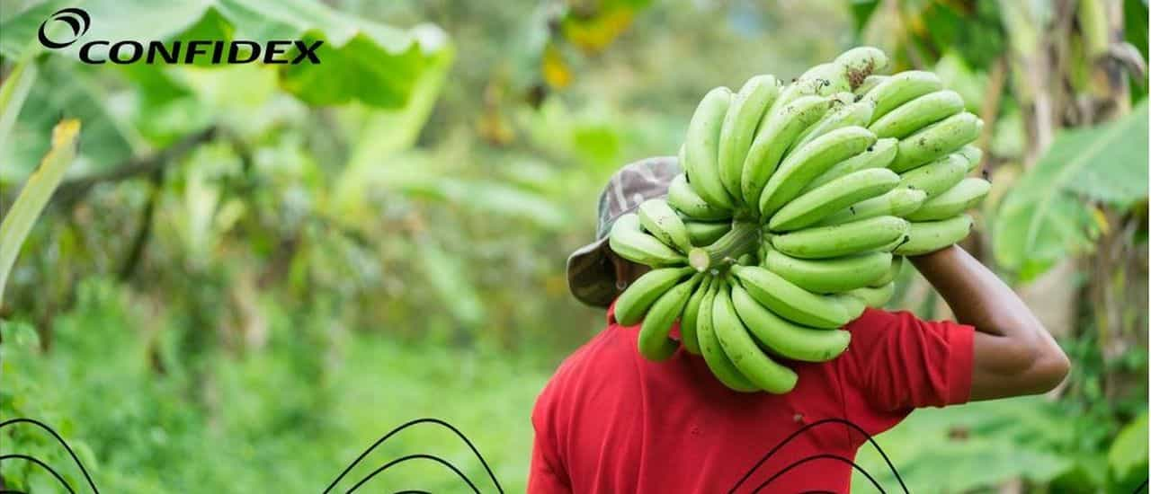 Banana Grower Tracks Harvest with NFC Tags from Confidex
